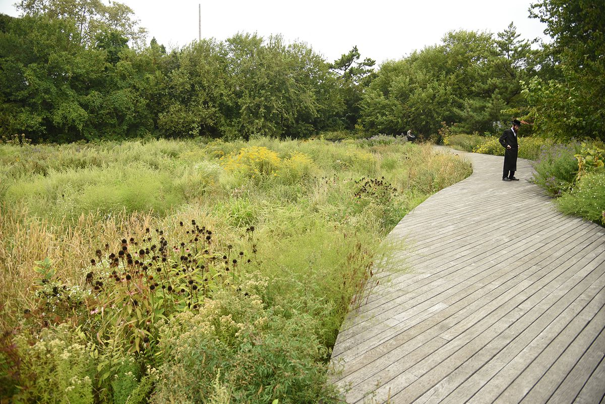 A park with tall grasses and a wooden pathway.