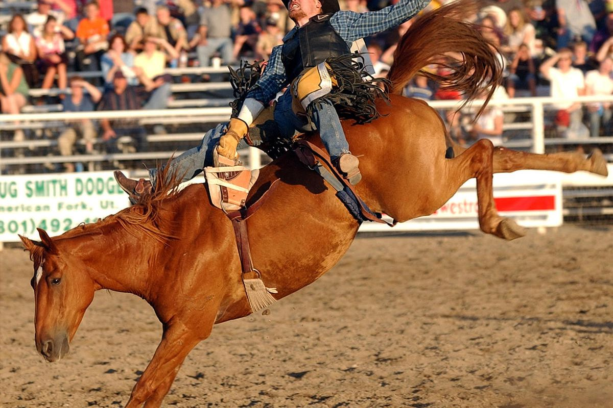 Jess Davis, of Salem, competes in the bareback bronc riding portion of the Lehi Round-Up on Thursday June 27, 2002.