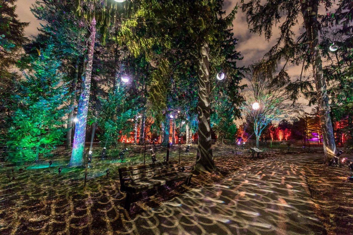 """Illumination: Tree Lights at The Morton Arboretum"" returns to the Lisle park in its original format beginning Nov. 20."