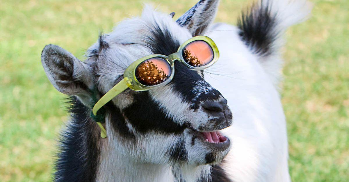 weeks    web dance   goat  verge