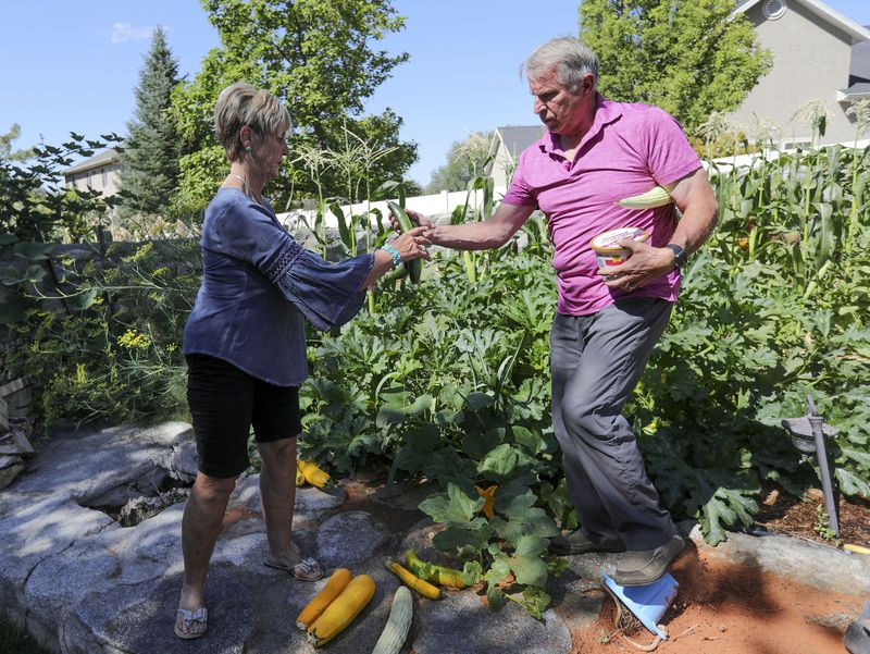 Donnalee and Tim Eisenhart harvest cucumbers and blackberries from their garden in Lehi on Wednesday, Aug. 12, 2020. They both substitute teach four or five days a week and have committed to return for the 2020 school year, despite the COVID-19 pandemic and the fact they are both in their 60s and Donnalee Eisenhart has asthma.