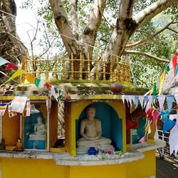 Shrines with the sacred Bodhi tree can include images of the Buddha, places for offering flowers and oil lamps, and the practice of hanging colored cloth at the shrine, like this one at the Aluvihare Buddhist Monastery in Sri Lanka.