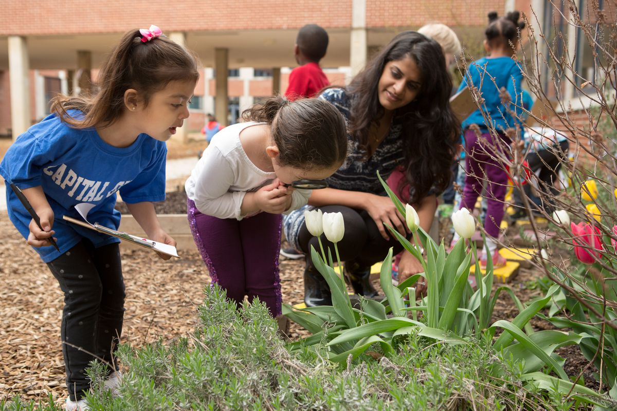 Preschool students and their teacher survey blooming flowers in a school garden.