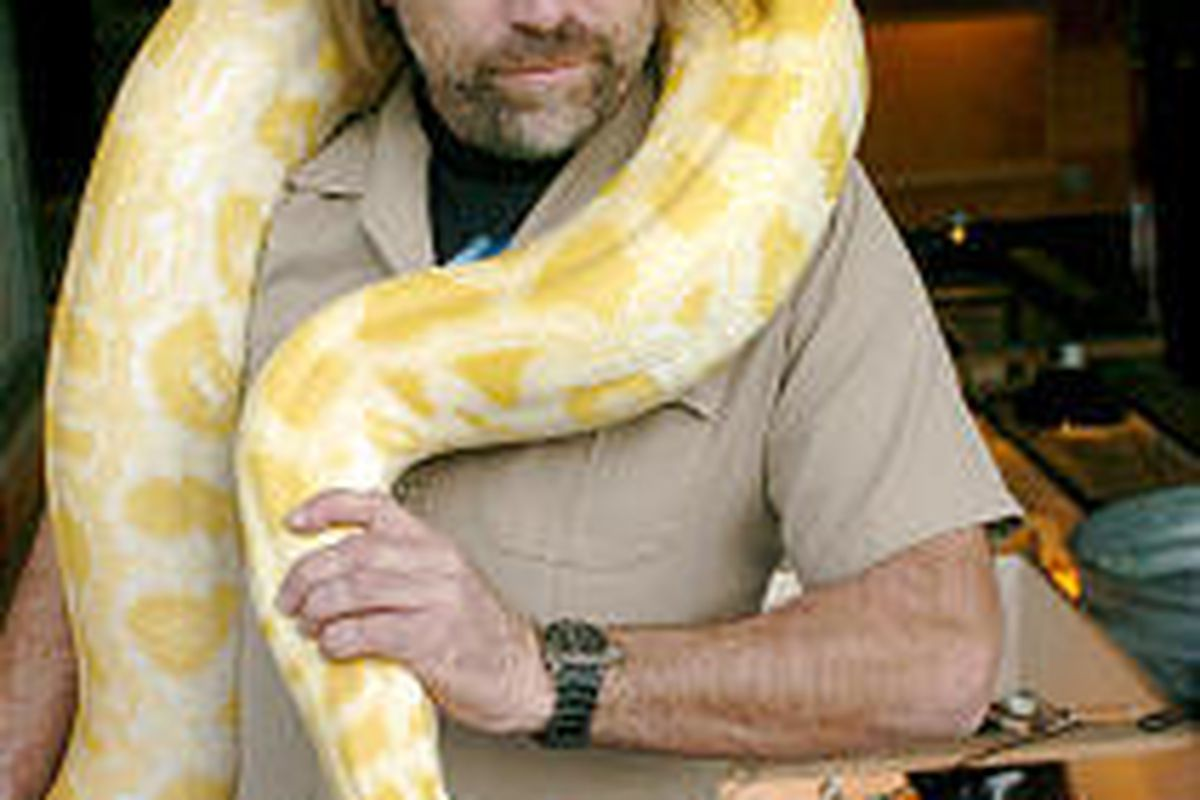James Dix shows off China, an 11-foot, 90-pound albino Burmese python that was rescued from Idaho.