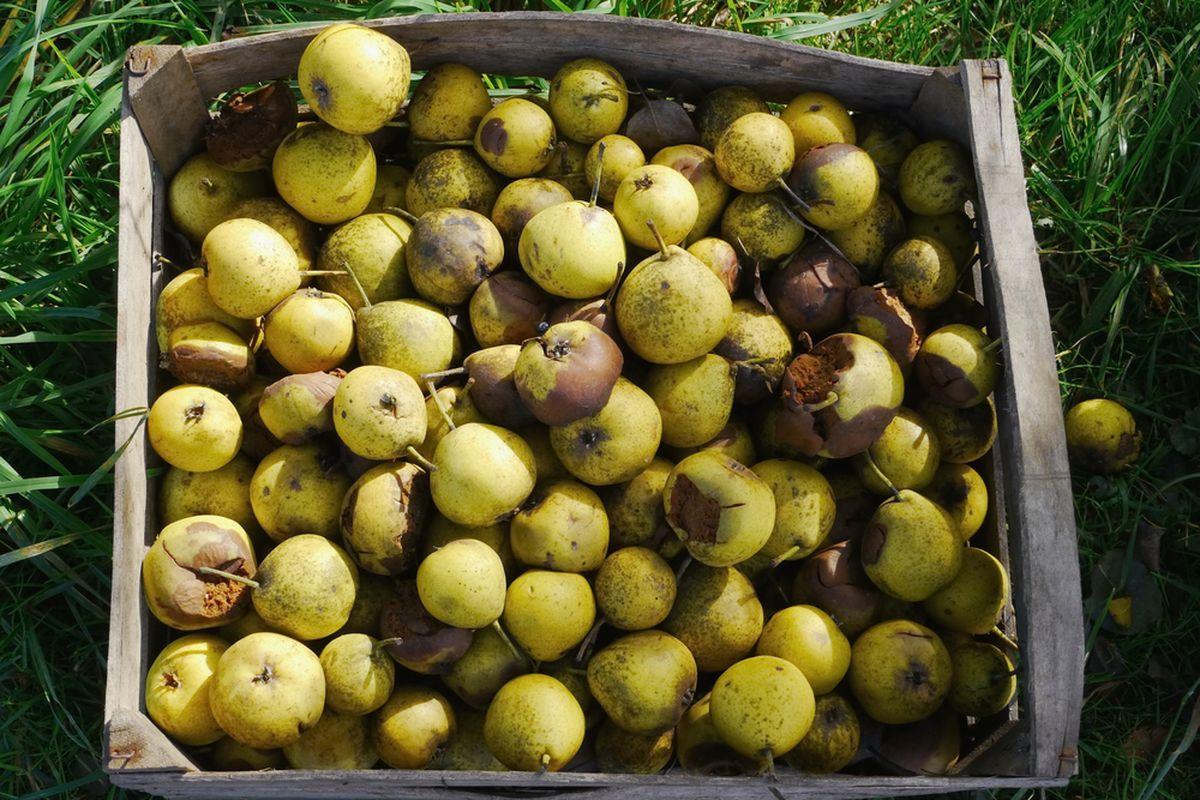 Meet the Entrepreneurs Making Food Waste Edible (and Profitable) - Eater