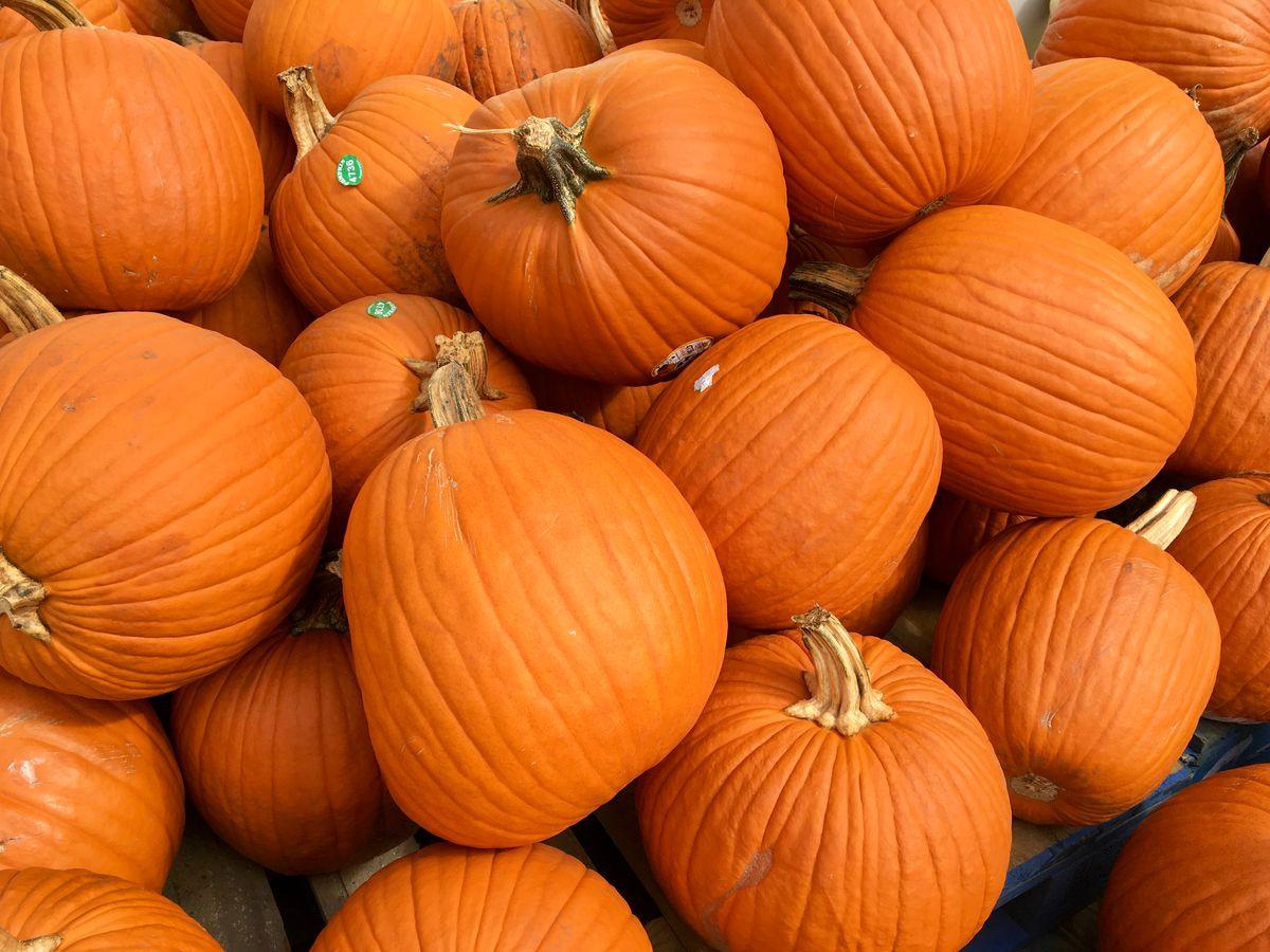 A close-up look at a pile of pumpkins.
