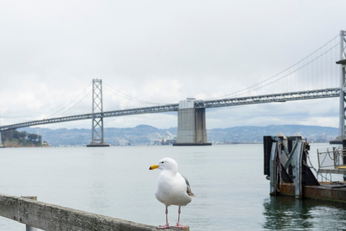 The Bay Bridge, with a seagull on a rail in the foreground.