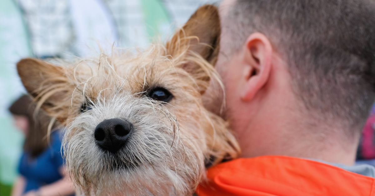People who own dogs may live longer