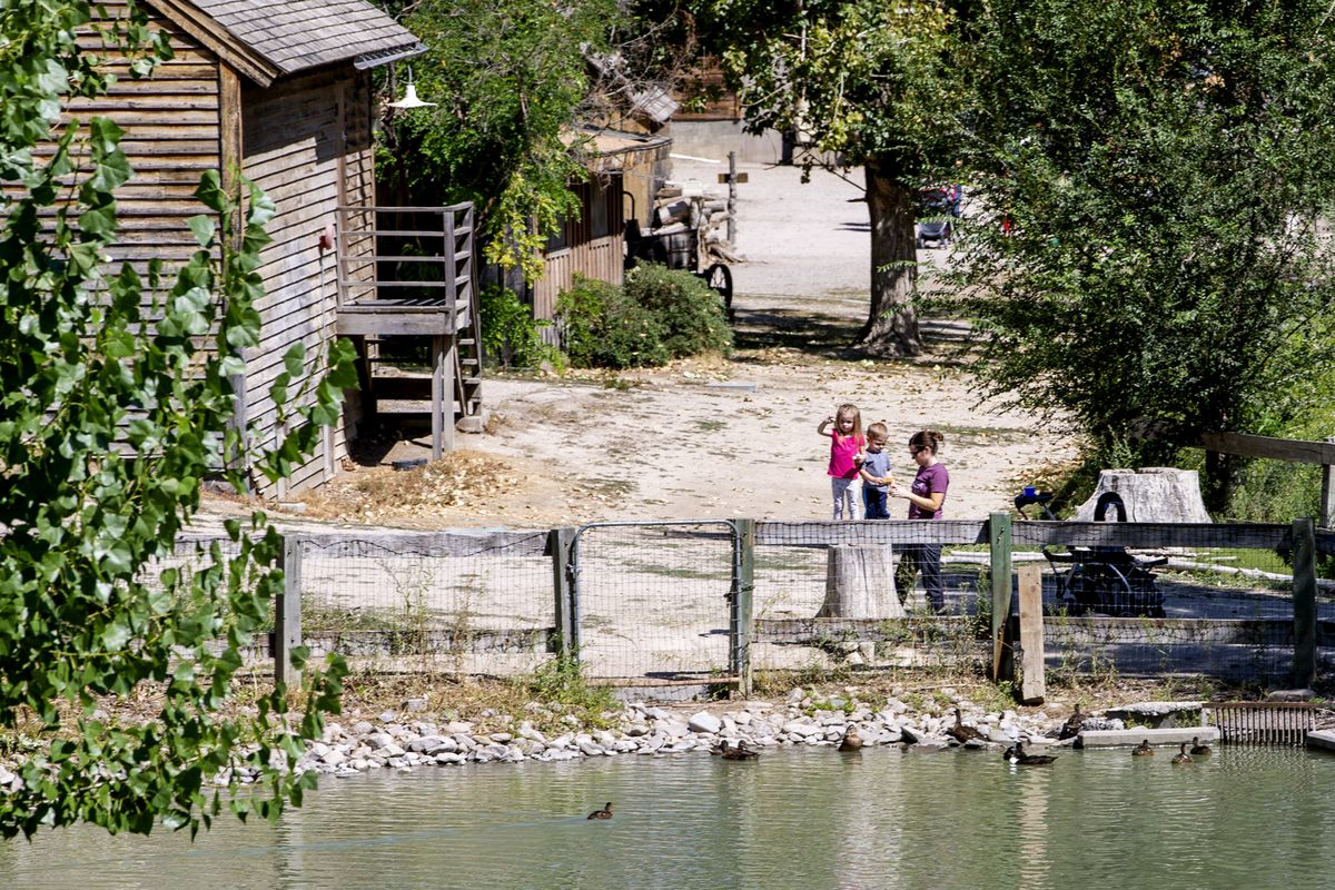 A woman and kids feed ducks at Wheeler Historic Farm in Murray on Tuesday, Aug. 28, 2018. Dangerous algae has been identified in the water.