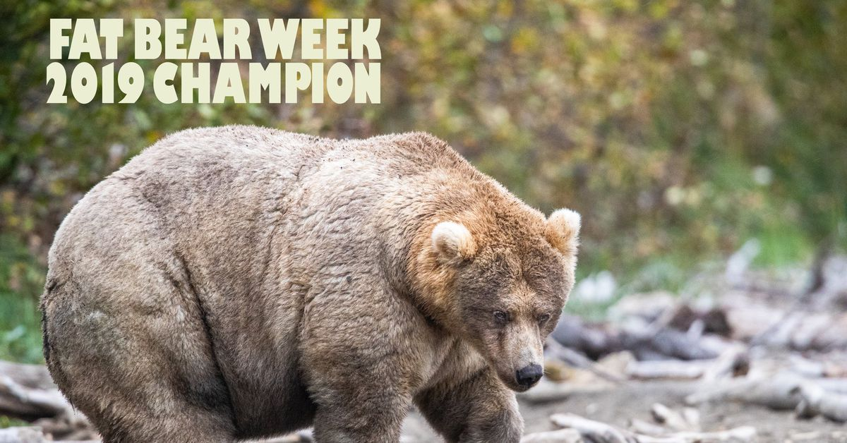 Fat Bear Week 2019: Alaska's Katmai National Park's fattest brown bear is  up to you - Vox