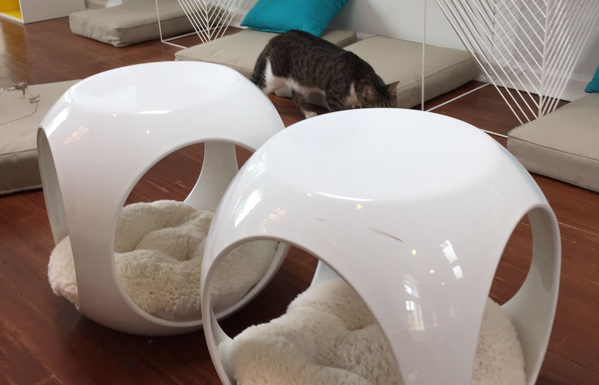 Cat orbs with cushions in them