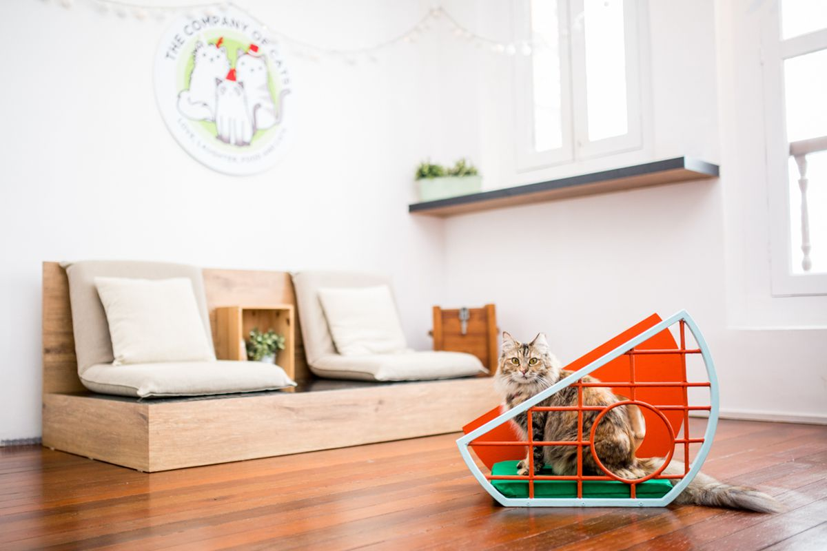 A furniture design show for cats is a thing meow curbed for Mobilia instagram