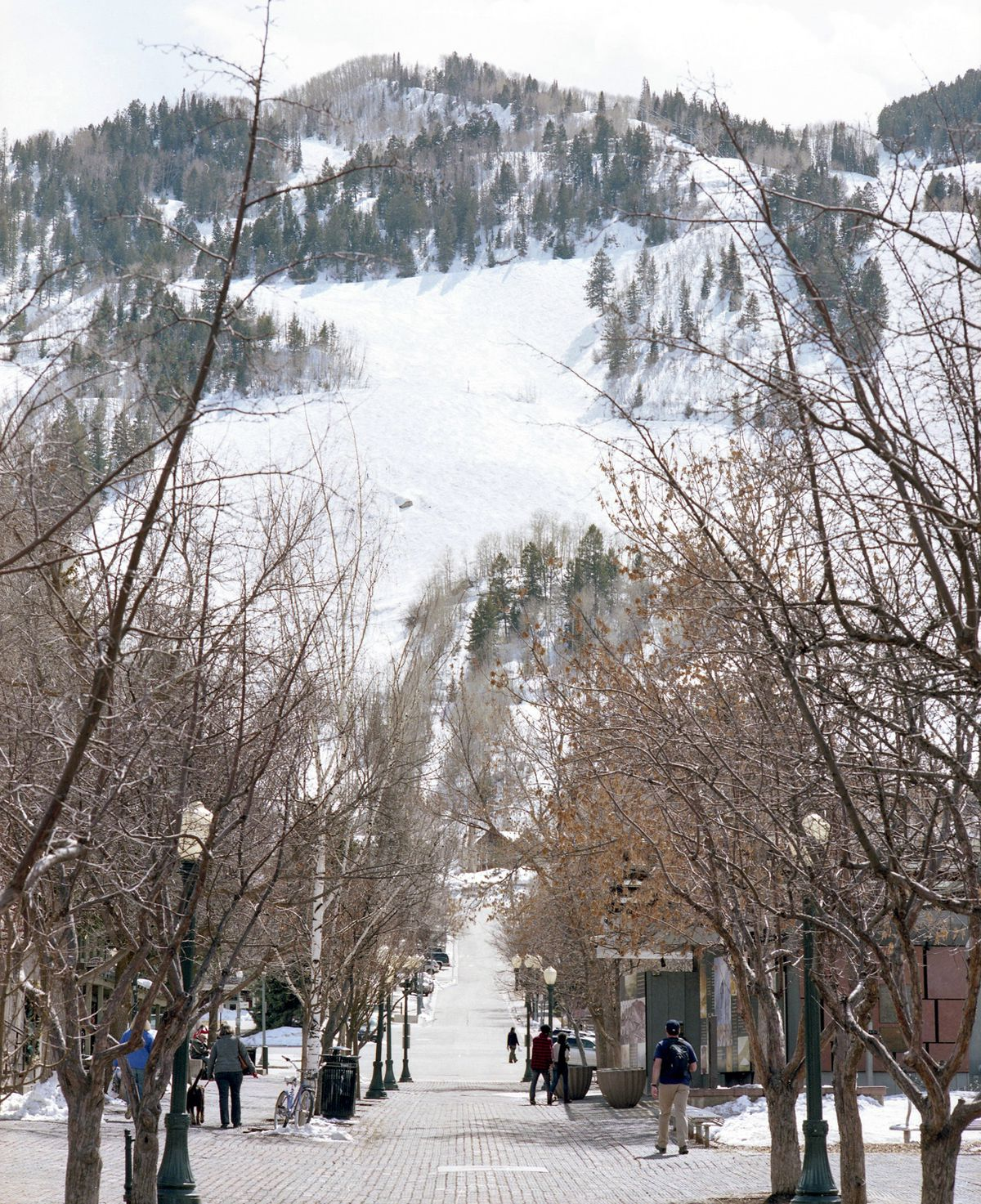 View of a mountain covered in snow from the town with trees without leaves in the foreground.