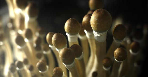 How psychedelic drugs might transform how we treat