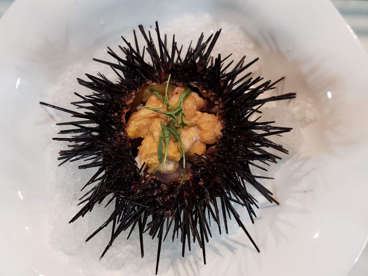 Holbox's sea urchin ceviche in Los Angeles, California