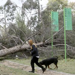 Cylis DeLuna walks by a tree that was felled by high winds in Liberty Park in Salt Lake City on Tuesday, Sept. 8, 2020.