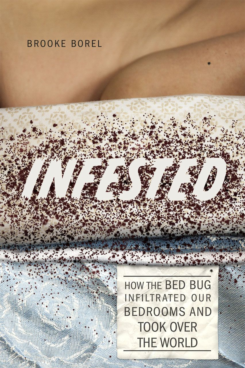 Why bed bugs have made a horrifying comeback - Vox