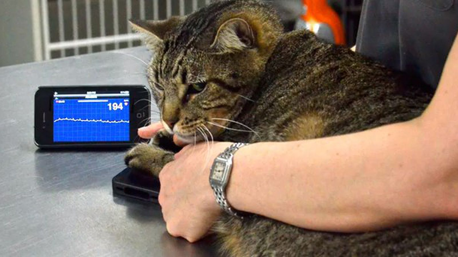 alivecor lets you check your pet u0026 39 s heart rate using an iphone
