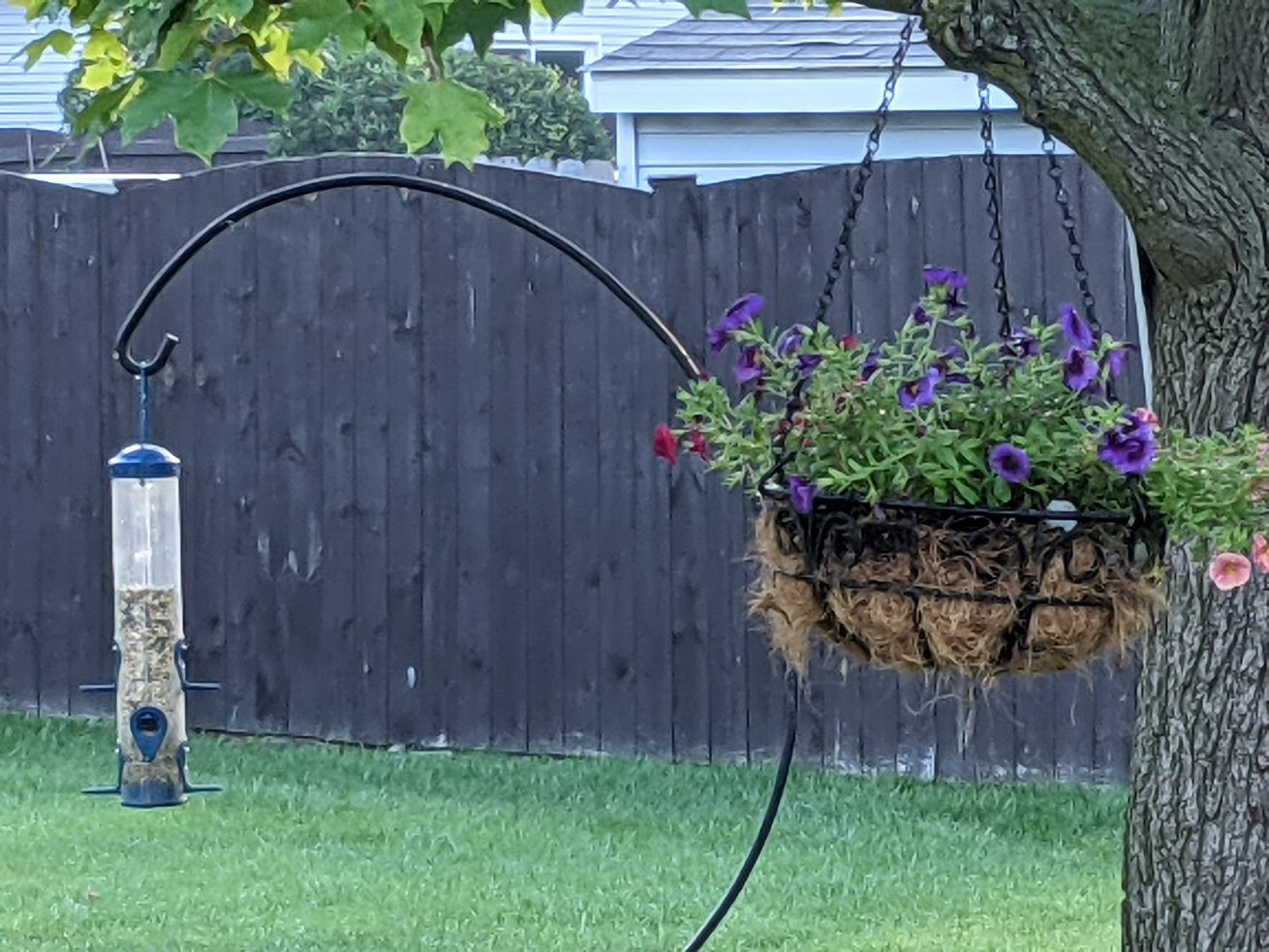 A still life of a bird feeder and a hanging basket. Credit: Dale Bowman