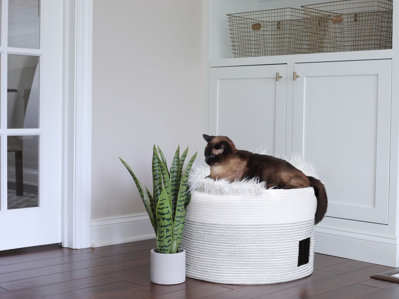 Cat sitting on top of a DIY bed made from a basket.