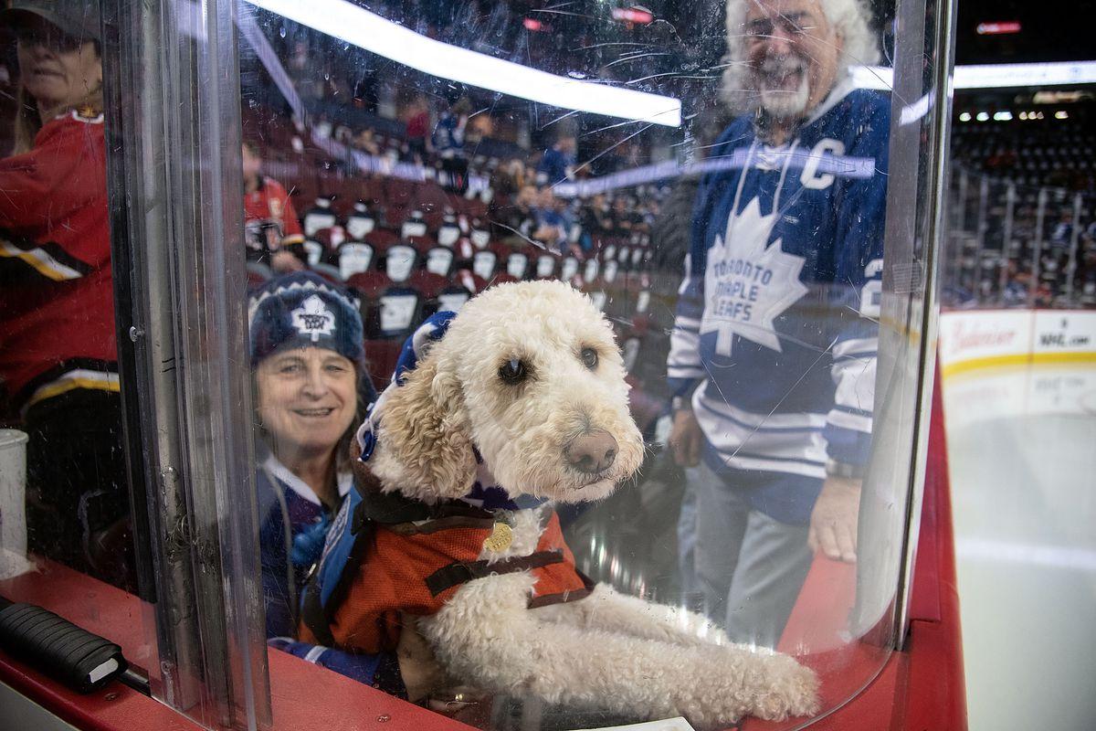 NHL: MAR 04 Maple Leafs at Flames