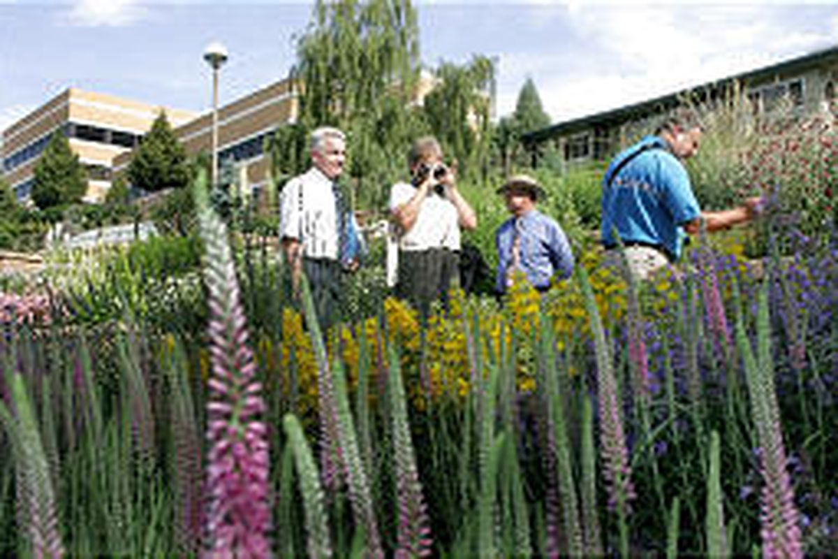 America in Bloom judges Leonard Perry, right, and Lee Nelson, second from left, are escorted by campus landscape architect Bruce Maw, left, and grounds director Roy Peterman as they check out flowers and shrubs Tuesday on the BYU campus.