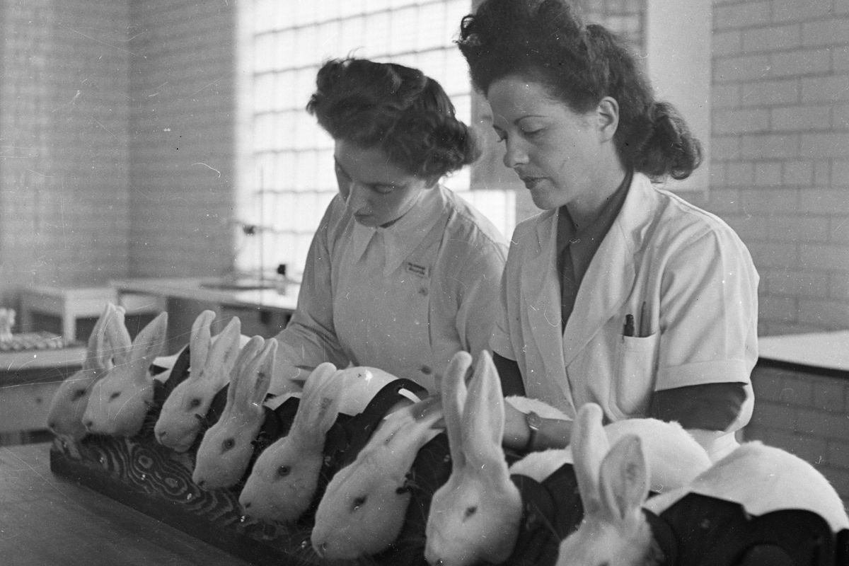 Bunnies hard at work testing penicillin in 1946, at a facility in Speke, Liverpool.