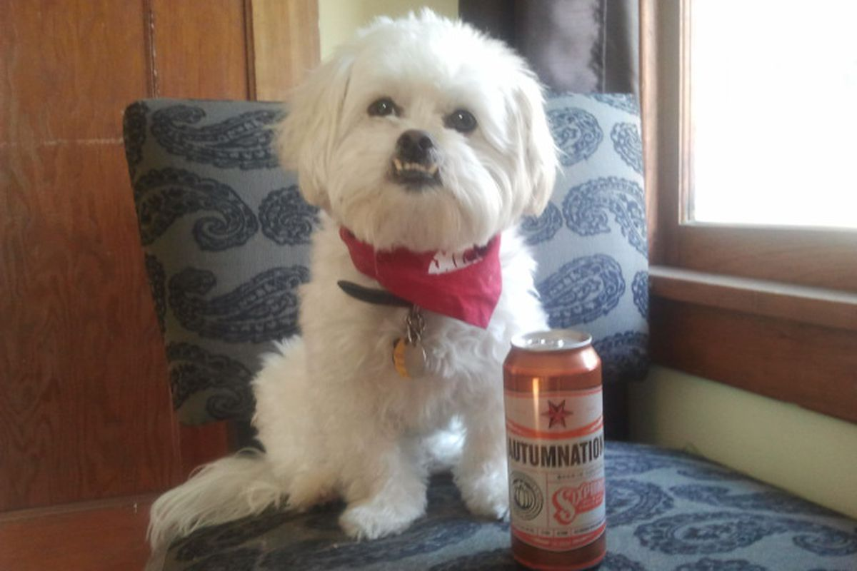 Baxter the Pekapoo found a beer that combines all the best things from this time of year.