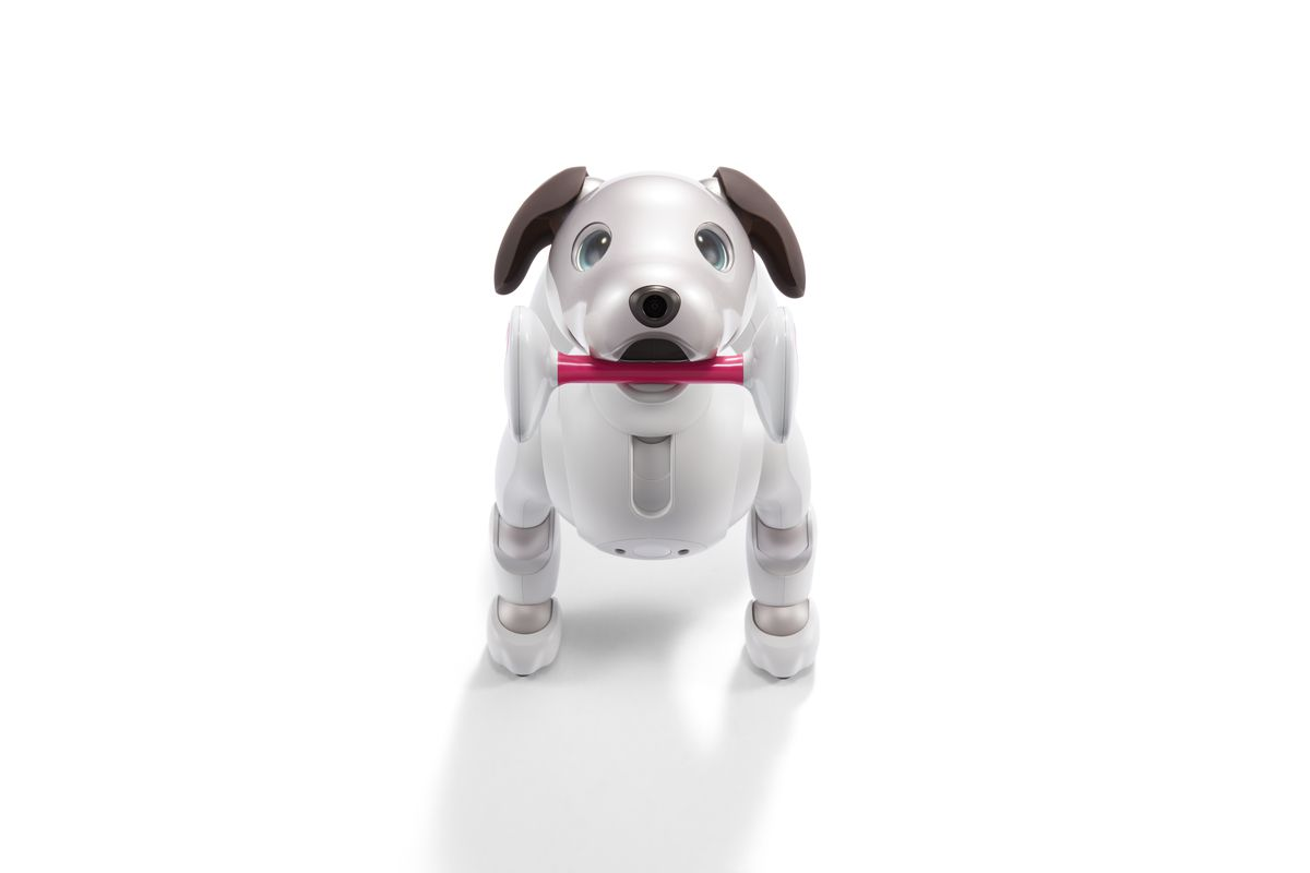 Robotic dog carrying toy
