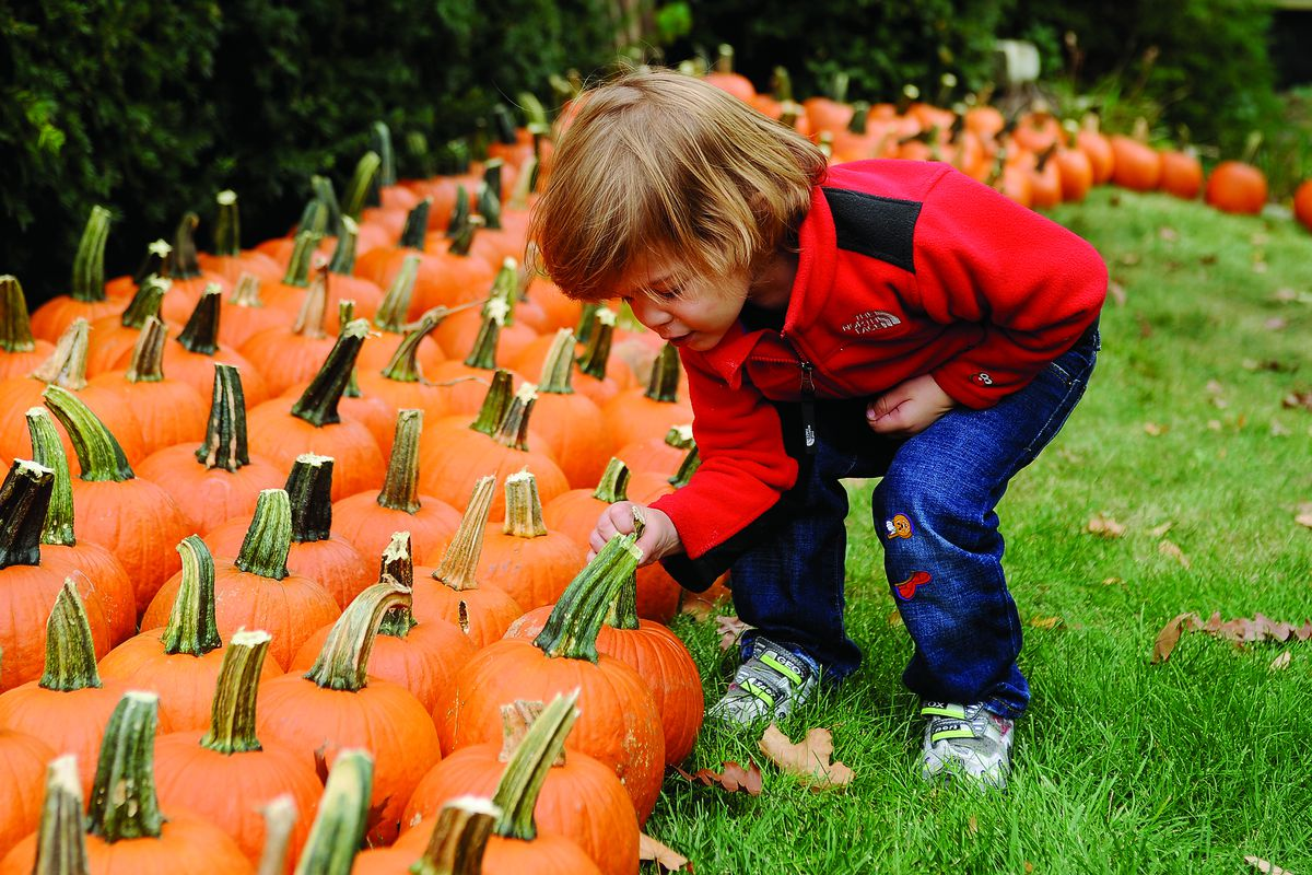 It's a little too early to pick pumpkins, but not too early to start enjoying pumpkin-flavored lattes and Halloween-themed candies.