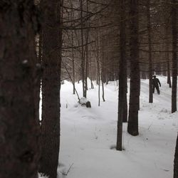 In this Wednesday, April 4, 2012 photo, a North Korean soldier walks through a forest that is said to be a camp site where the late North Korean leader Kim Il Sung spent the night while leading a battle against the Japanese at the foot of Mount Paektu.