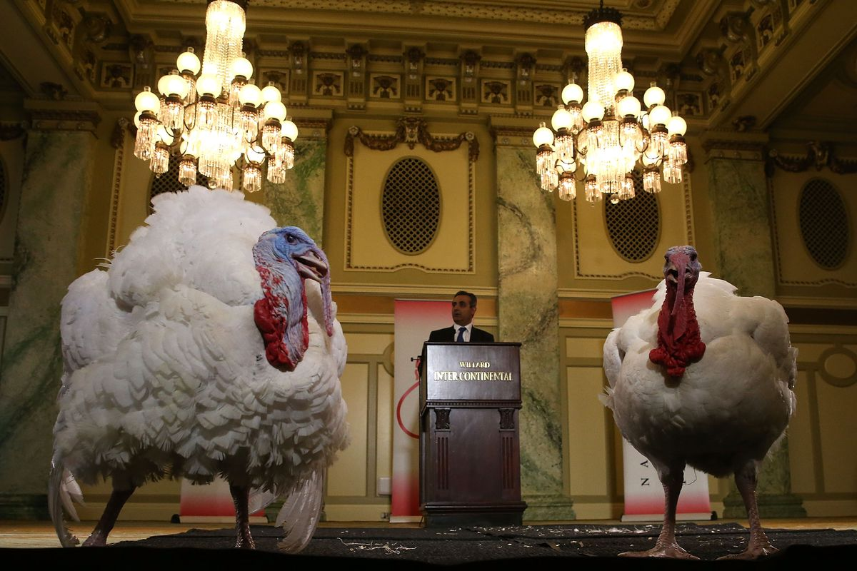 White House turkeys are 'Drumstick' and 'Wishbone'