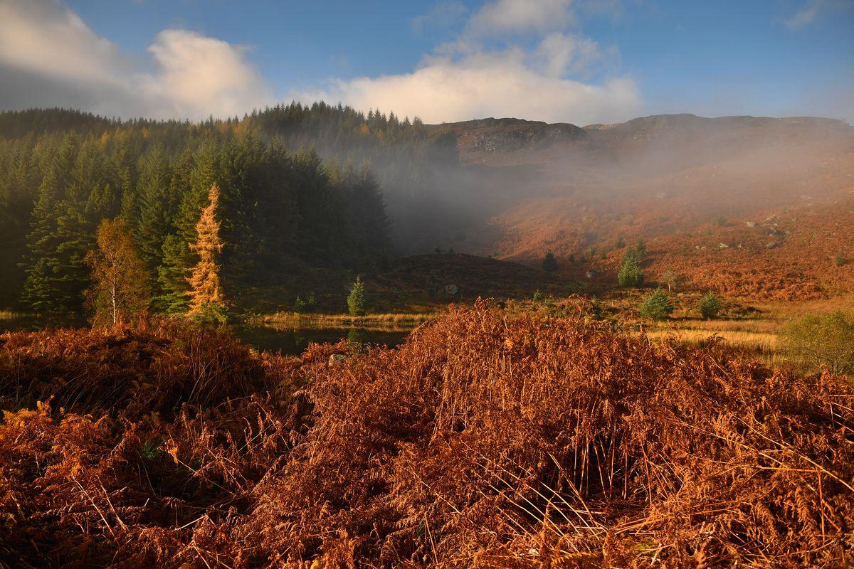 Beautiful Autumn Colours Are Seen Across Loch Lomond