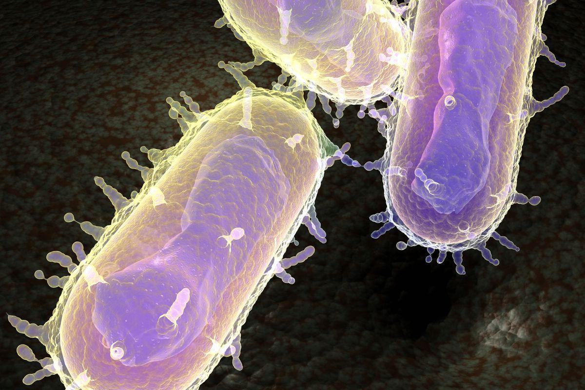 The Yersinia pestis bacteria, better known as the bubonic plague.