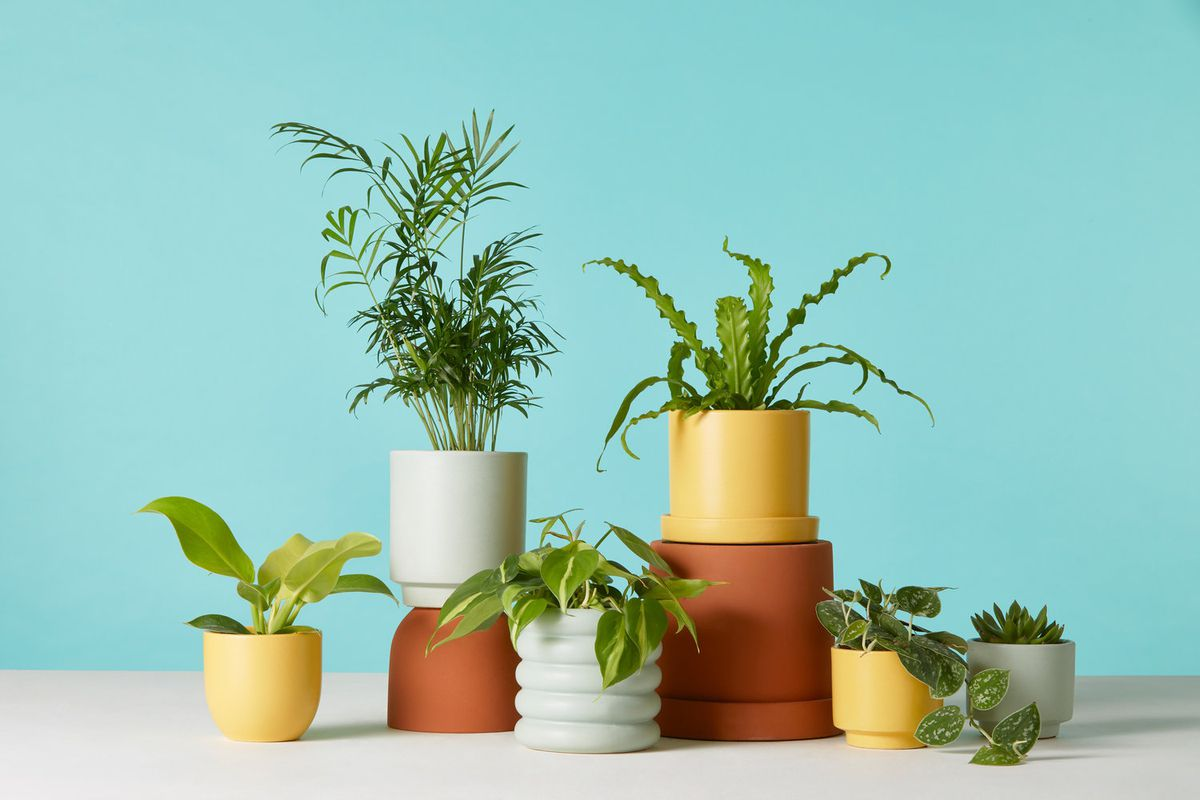 potted plants stacked
