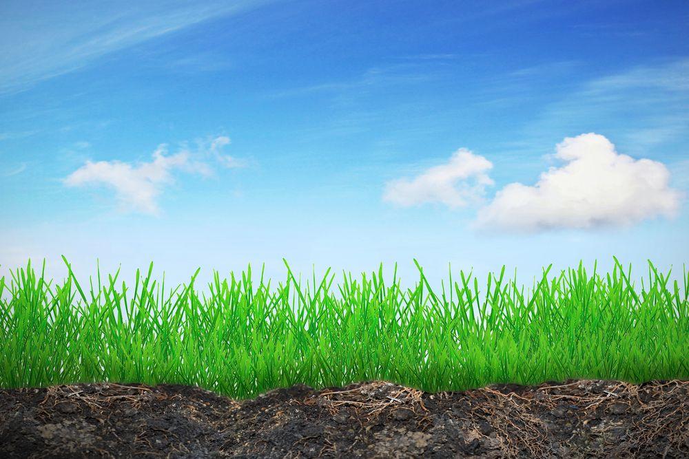 grasstops