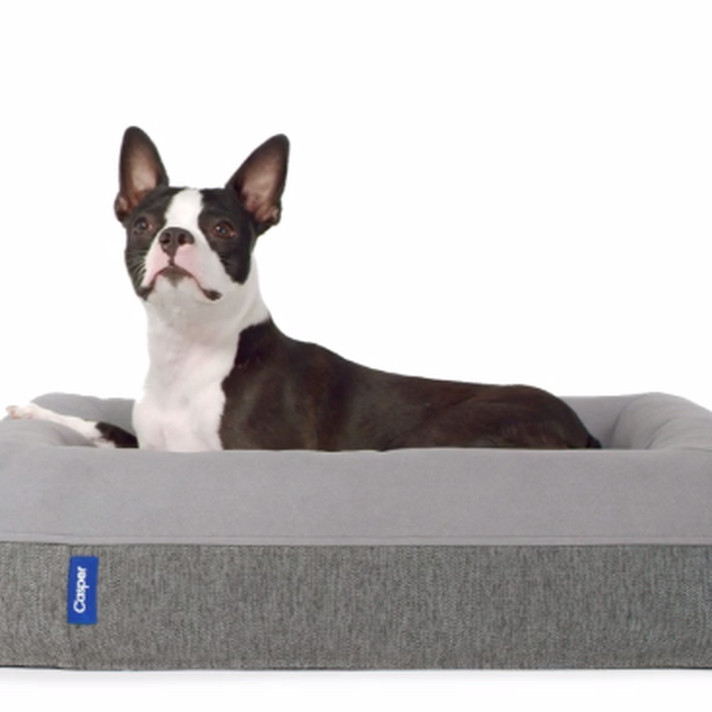 bed best in dogs heated chew dog the proof recommend beds
