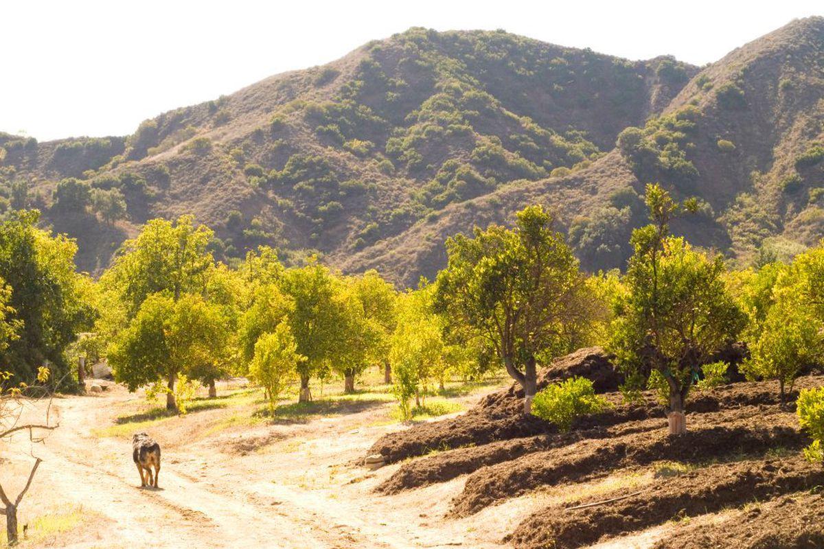 Mud Creek Ranch Farm