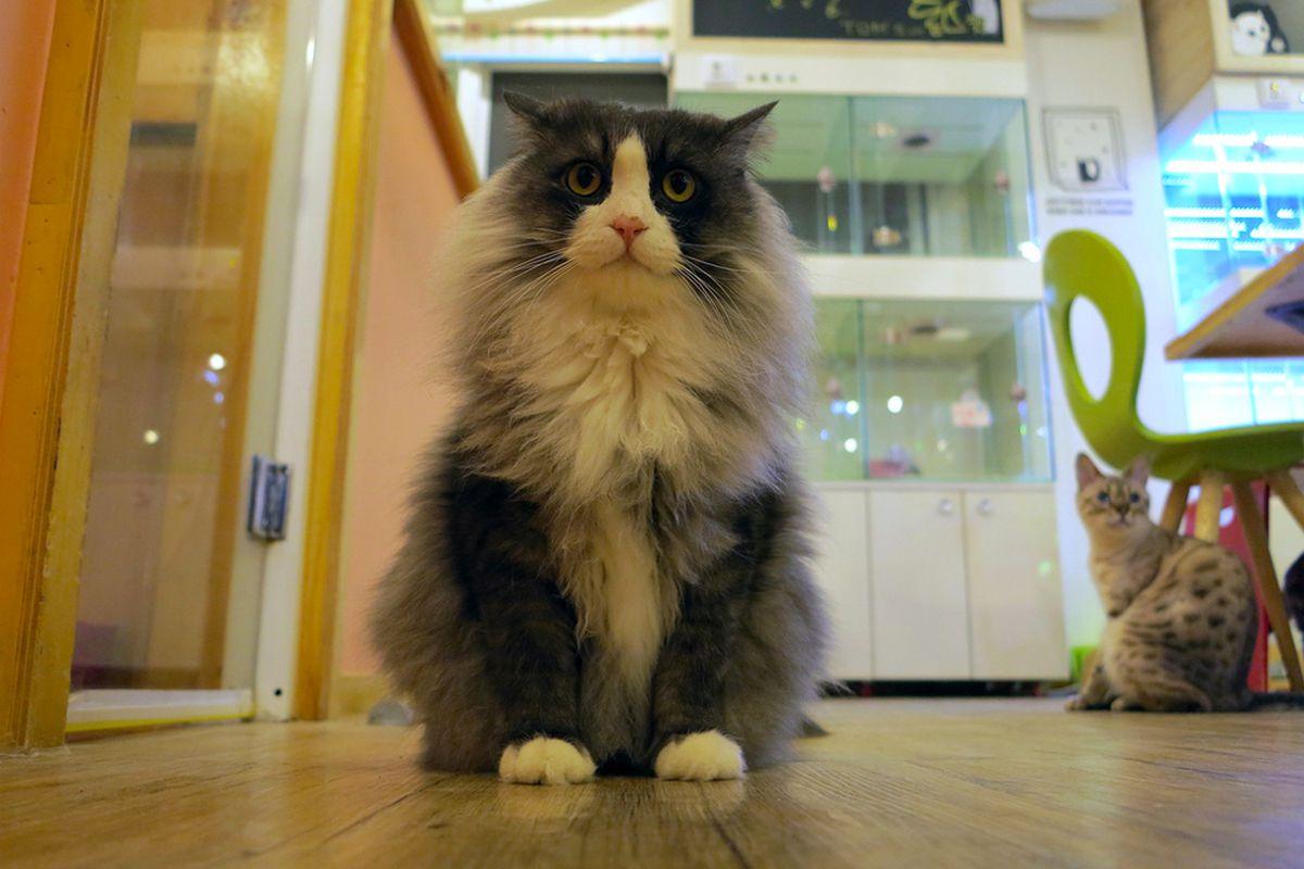 Tom's Cat Cafe, Seoul.