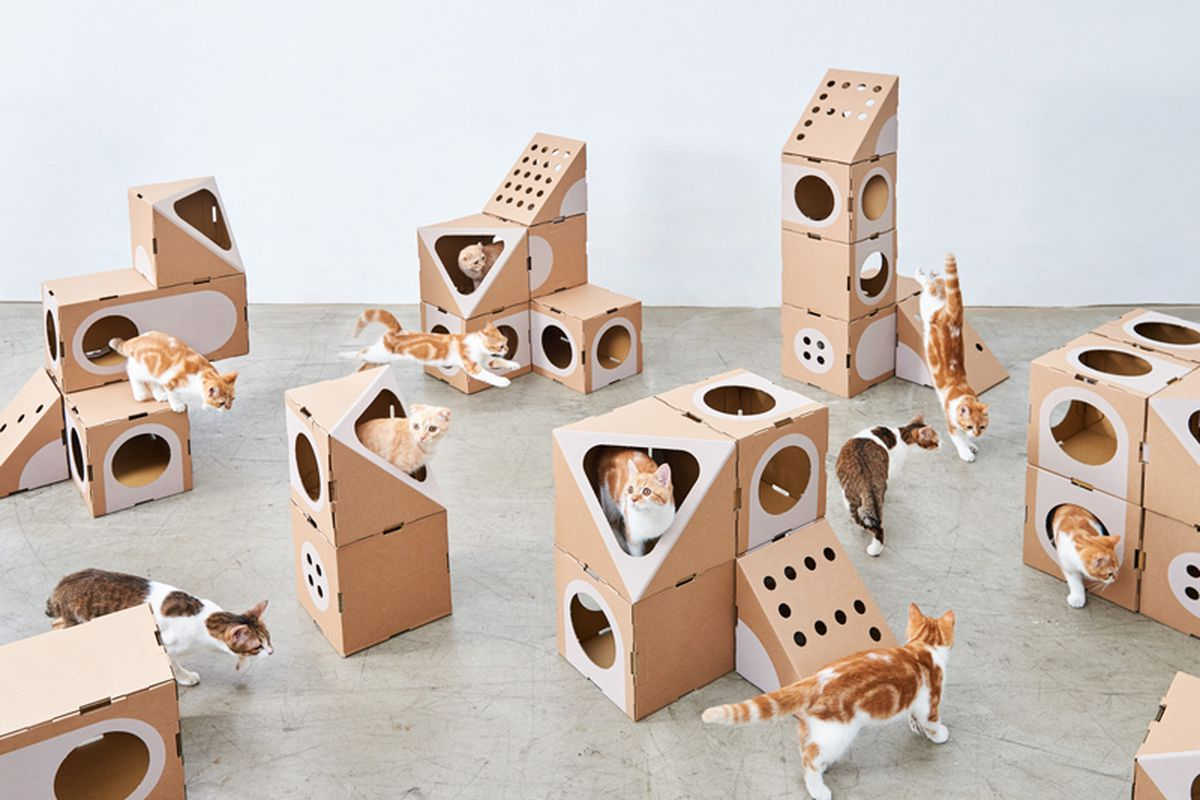 This Modular Cat Furniture Is Made From Cardboard Boxes Curbed