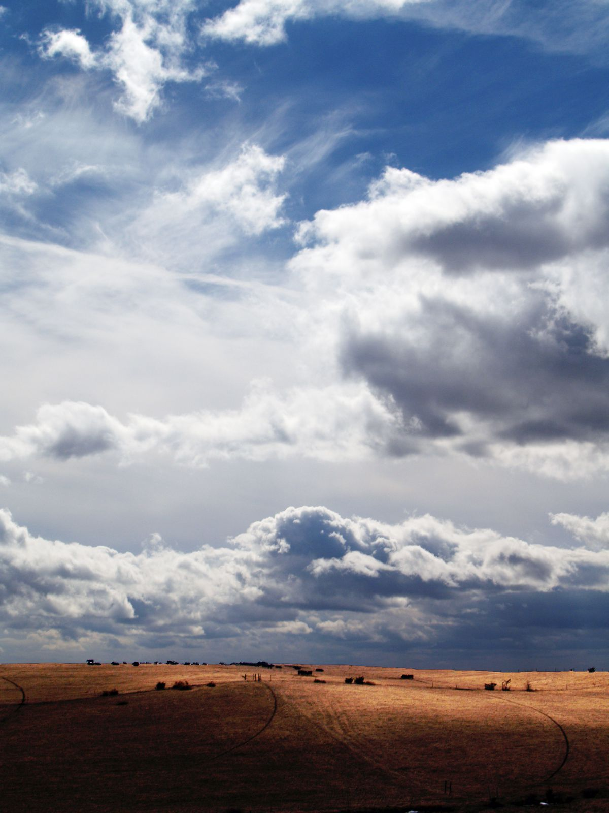 cattle in pasture and dramatic blue sky with clouds