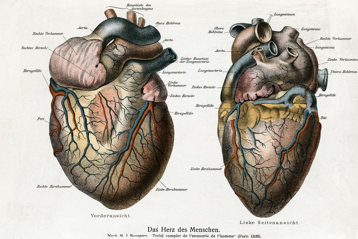 Two Diagrams of the Human Heart