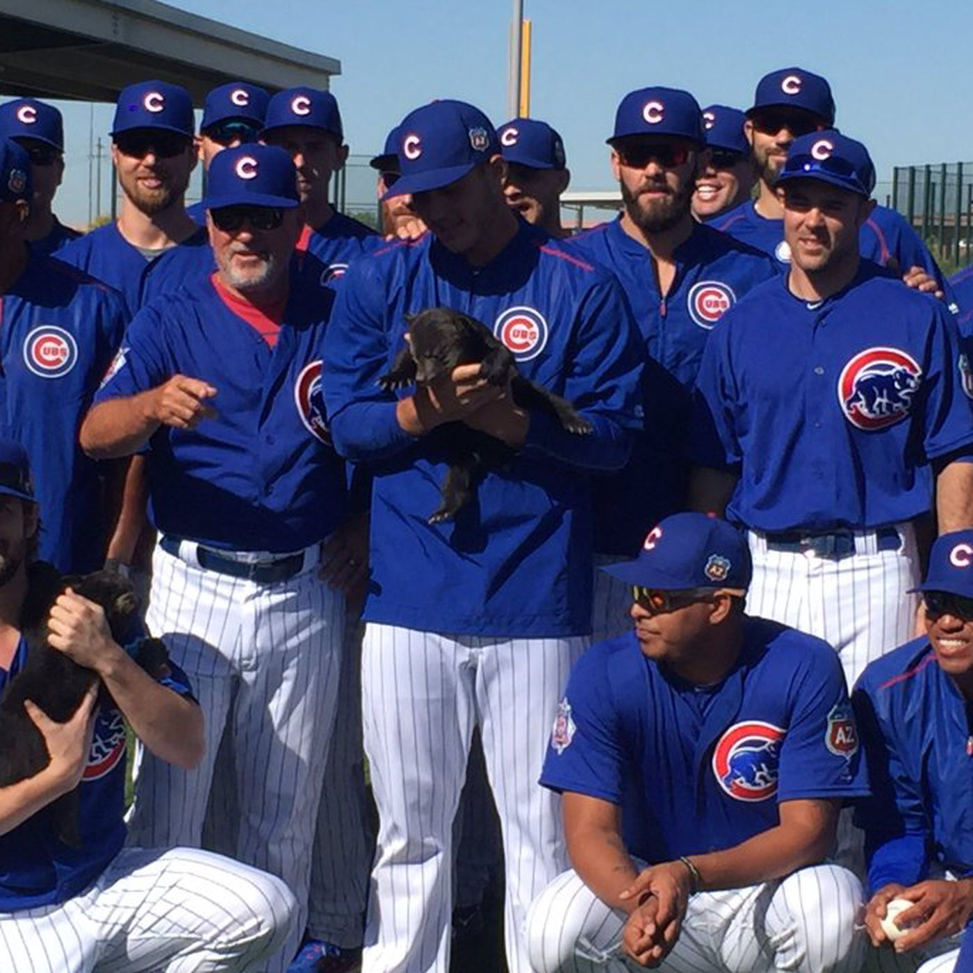 The Cubs are holding actual bear cubs at spring training because life is  beautiful - SBNation.com