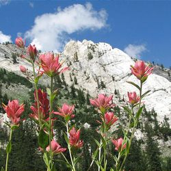 10. The Honeycomb Cliffs are seen from the trail. Indian paintbrush plants are in the foreground.