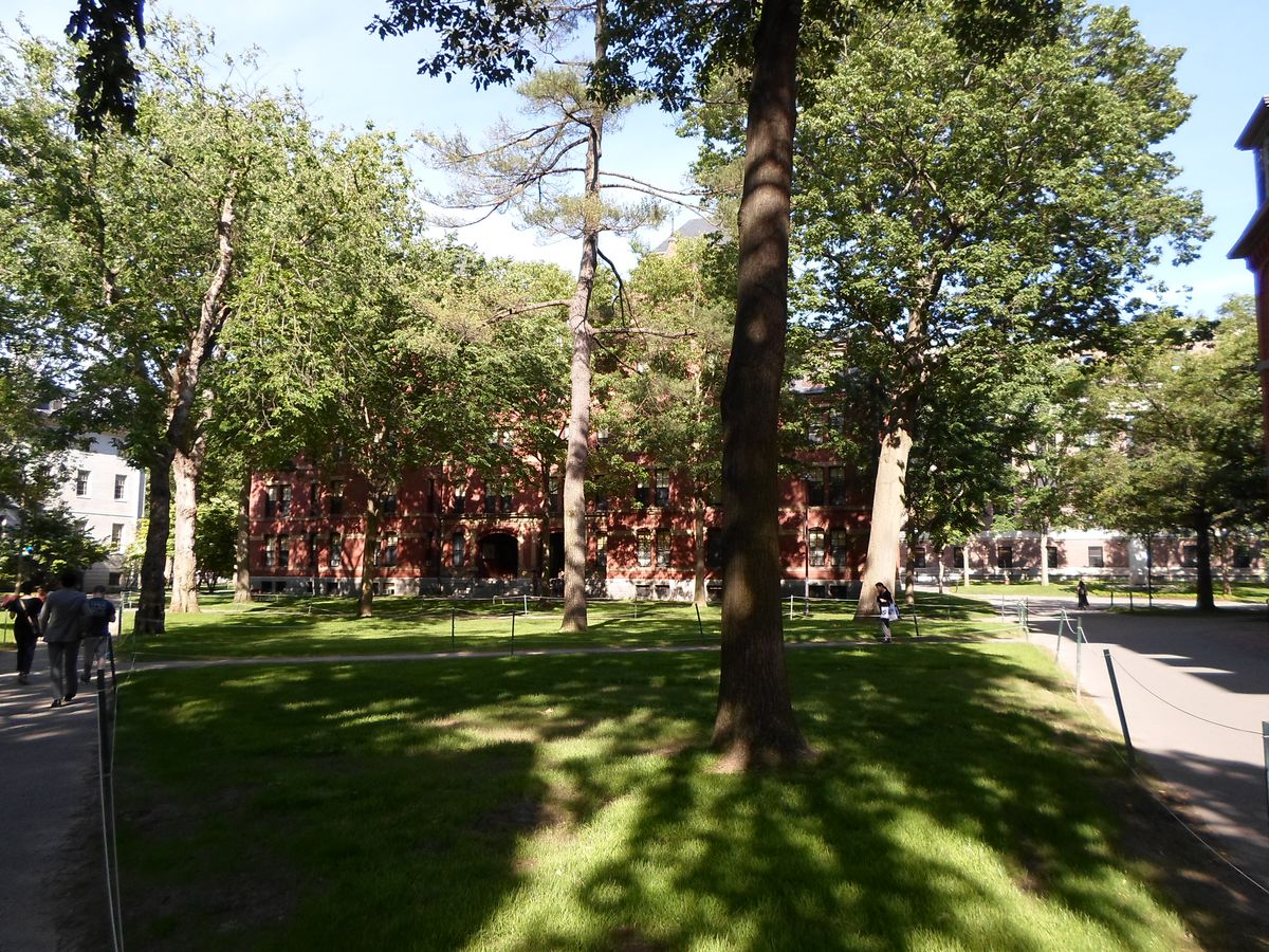 An academic building barely visible behind dense trees.