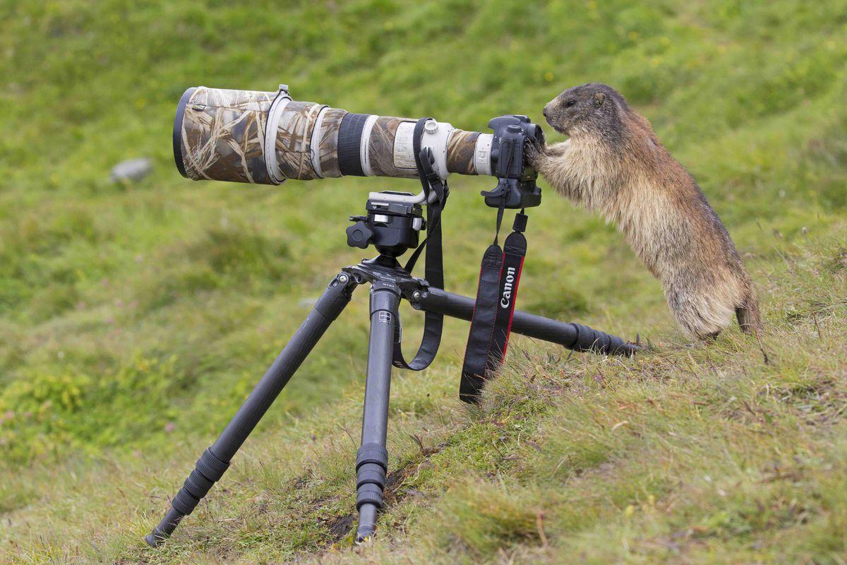 Alpine Marmot camera.