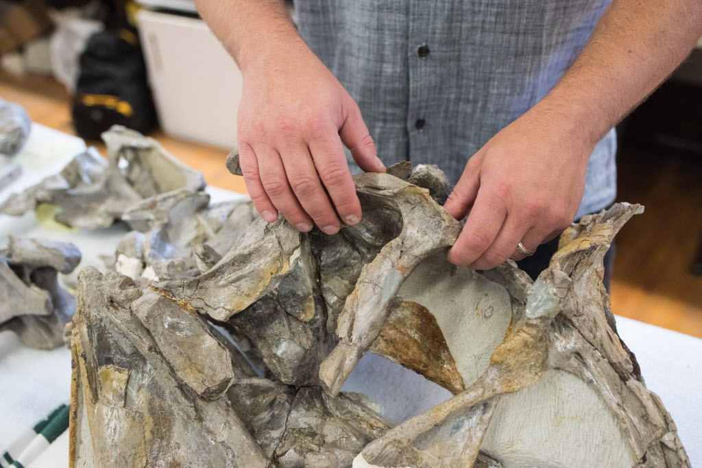 Peter Makovicky holds together pieces of a Cryolophosaurus skull found by his team.