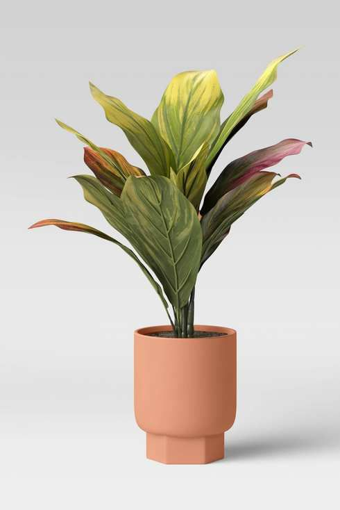 Plant in a pink planter.