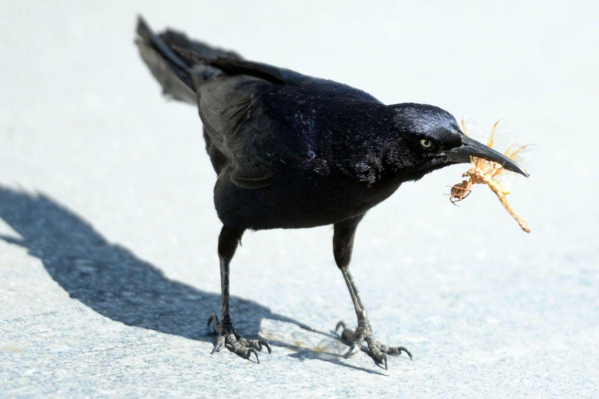 鸟类在坎昆的自然生活