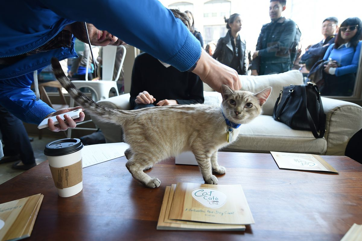 A pop-up cat cafe in New York City